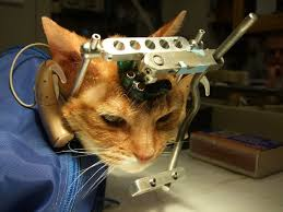 Animal Testing Is Animal Cruelty