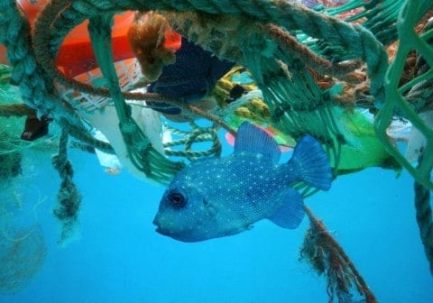 The image portrays what it's like for marine creatures, who are surrounded by litter.