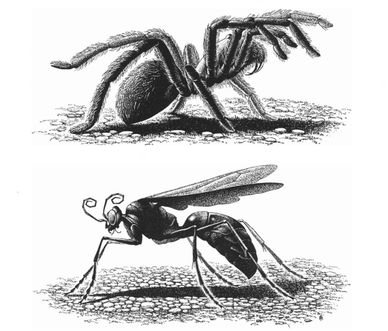 The Spider And The Wasp By Alexander Petrunkevitch August