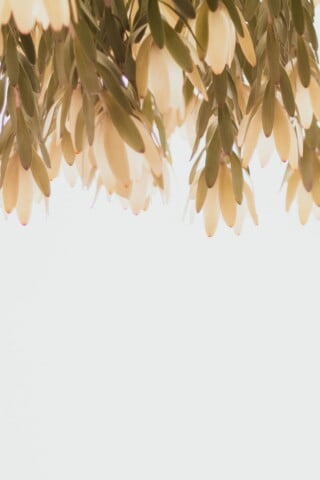 brown leaves on white background